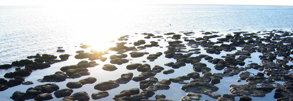 stromatolites2